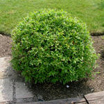 Huron® Gray Dogwood shaped ball