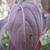 Prophet™ Kousa Dogwood leaf