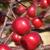 American Triumph™ Crabapple fruit