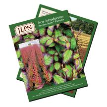 JLPN Persian Spire Parrotia flyer