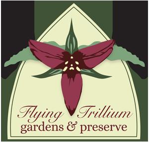 Flying Trillium