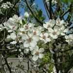 Jill flowers1502