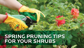 SPRING PRUNING TIPS FOR YOUR SHRUBS