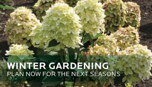 HGTV-HOME-Plants-Winter-Gardening