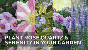 2e1ax_default_entry_HGTV-HOME-Plants-Pantone-Colors-in-the-Garden