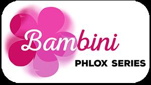 Phlox Bambini Desire