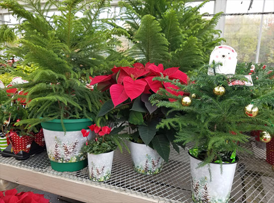 daVinci decorated pots with holiday theme